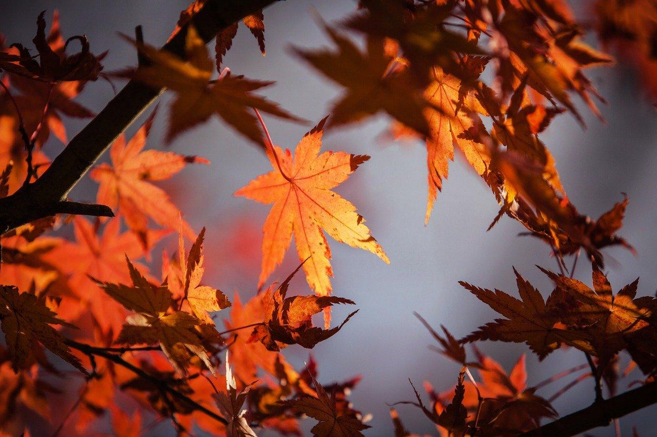autumn-leaves-1415541_1280